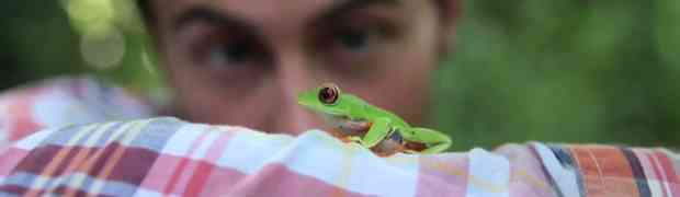 Video - Follow the frog